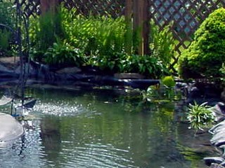 Clean Pond Syndrome